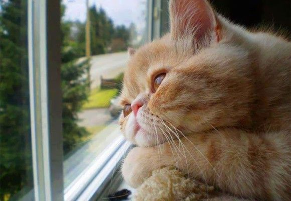 cat waiting for family