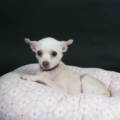 Dogs Dog Love Adoption New Puppy
