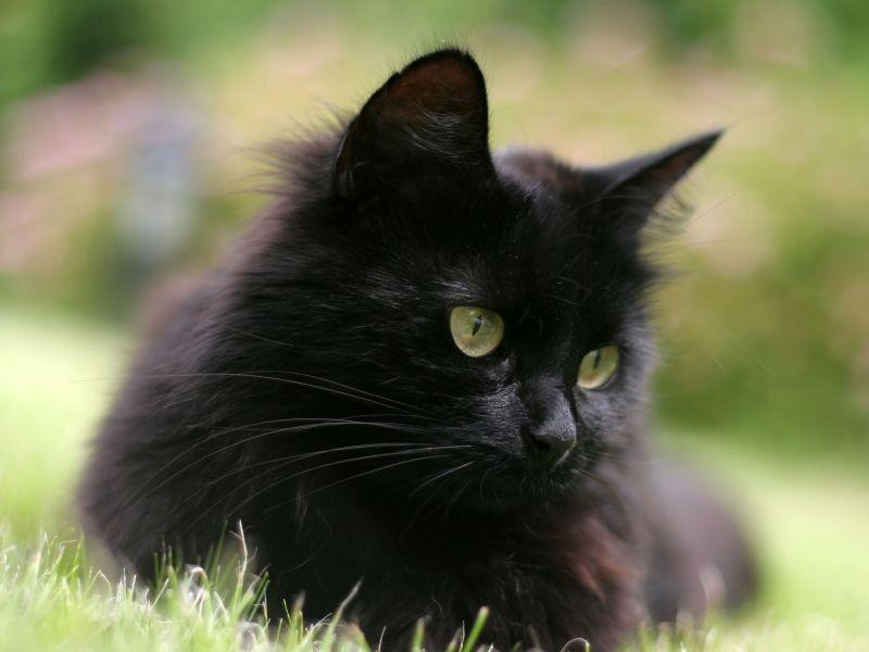 Dreimal Schwarzer Kater Die Schonsten Schwarzen Katzen Katzen Hundebilder Wilde Katzen