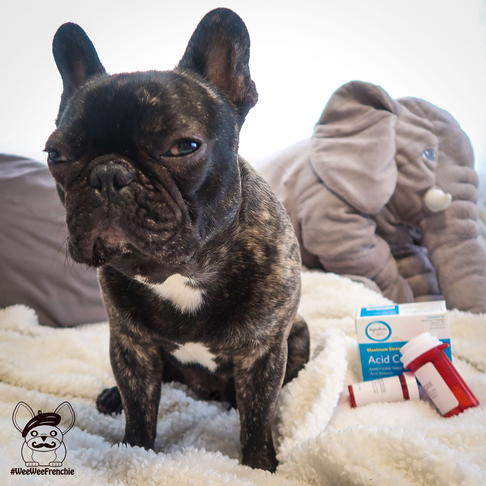 What Is Esophagitis Sick Puppies French Bulldog Upset Tummy