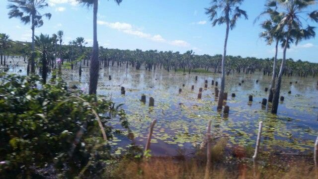 www.pinterest.com/claudialiredag/natureza/