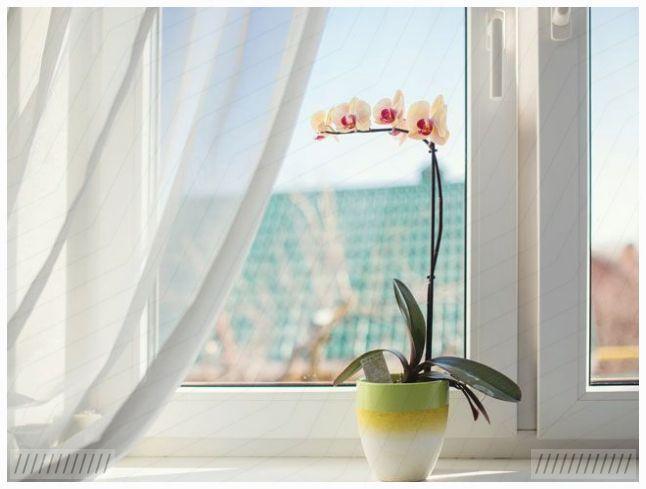 # Orchideen #Bitte # Umtopfen #Pflanze #Pflege ... #orchideenpflege # Orchideen #Bitte # Umtopfen #Pflanze #Pflege #P - - Orchideen -Pflege -...   - orchideen - #Bitte #Orchideen #Pflanze #Pflege #Umtopfen #orchideenpflege