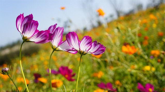 Fleur D Ete Au Jardin Liste Des Plus Belles Fleurs Et Conseils D