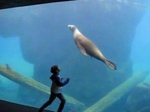 Little boy with Asperger's makes sea lion friend | GrindTV.com