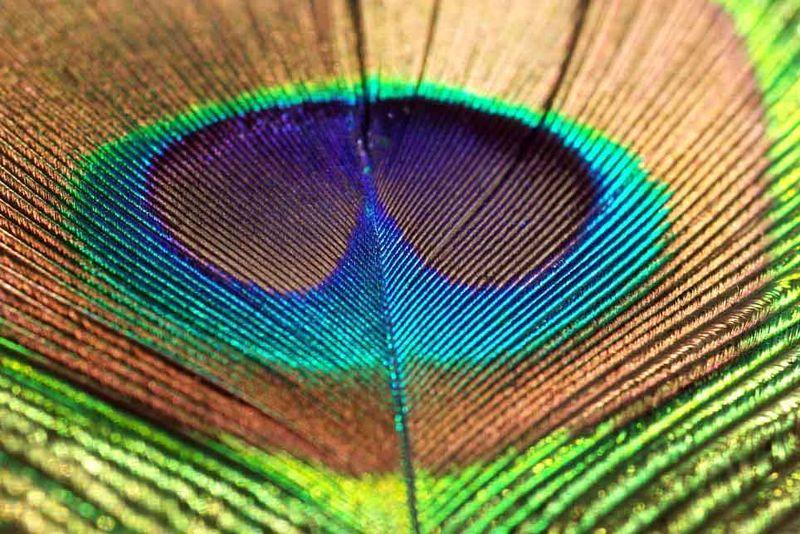 fond d écran plume - Pesquisa Google   Fond d'ecran plume, Plume de paon