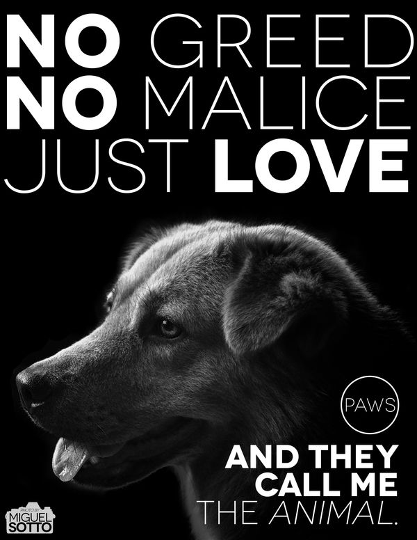 Animal Welfare Posters Google Search Dog Quotes Dog Poems