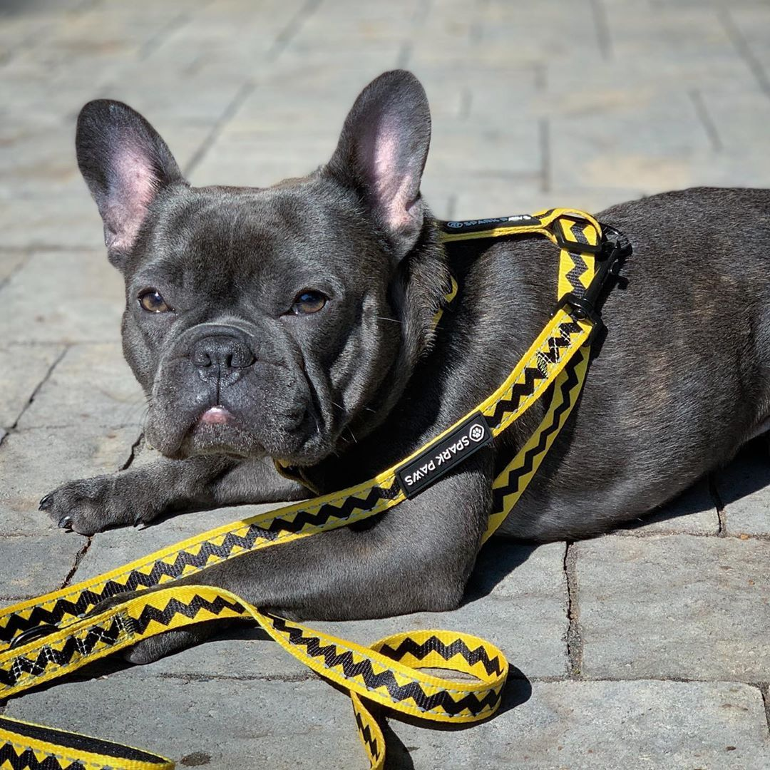Visit our website for more thing about french bulldog