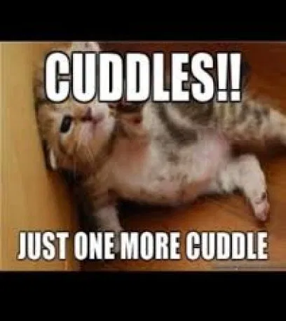 Top Romantic Cuddle Memes And Quotes For Him Her In 2019 Romantic Memes Cuddling I Want To Cuddle