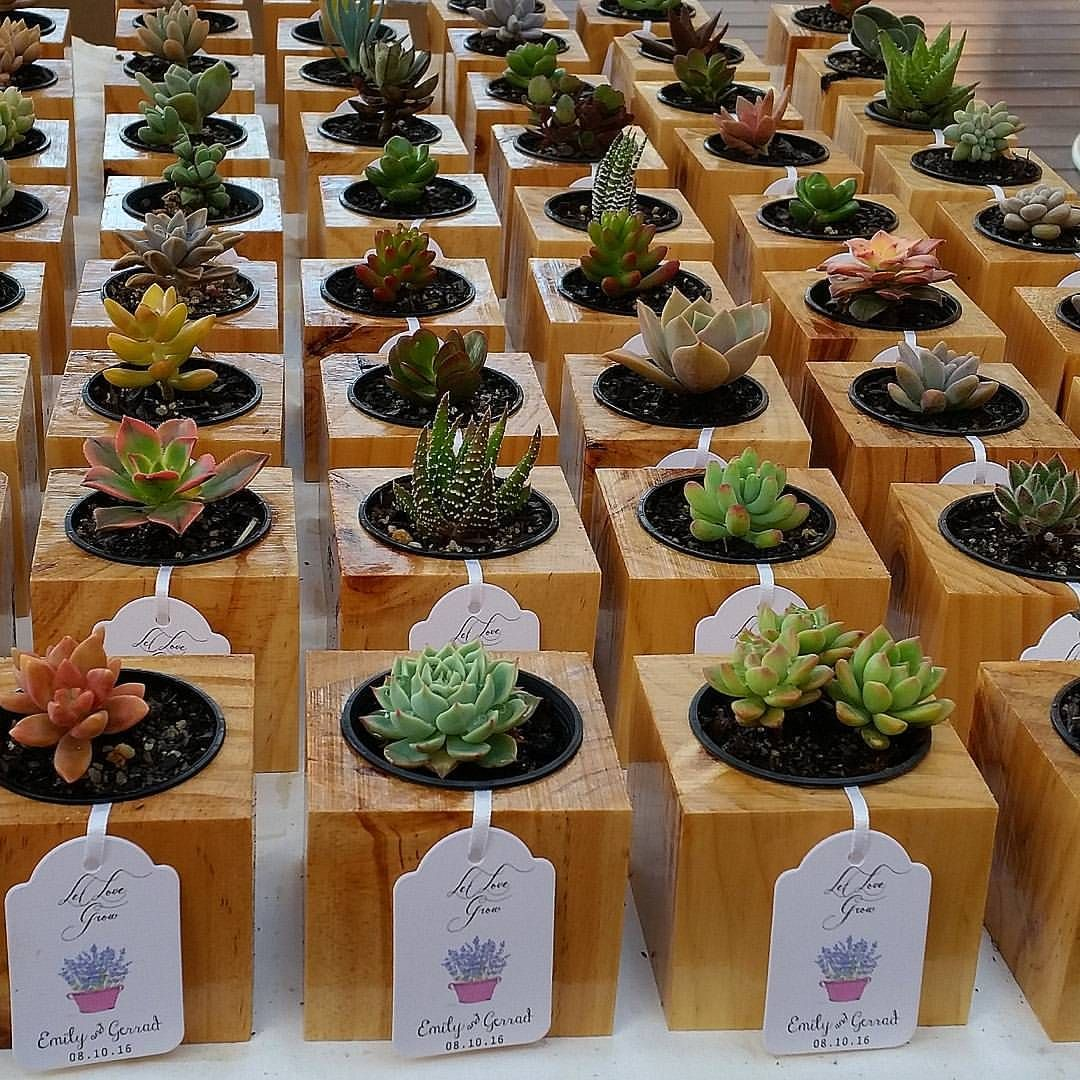 Succulent wedding favours. The perfect and affordable way to thank your guests. Available from the Succulent Guy.