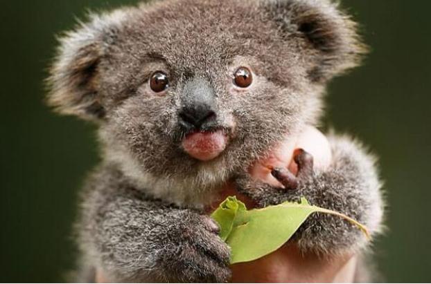 Pin By Alexander Halg On Aussergewohnliches Baby Animals Cute Animals Cute Baby Animals