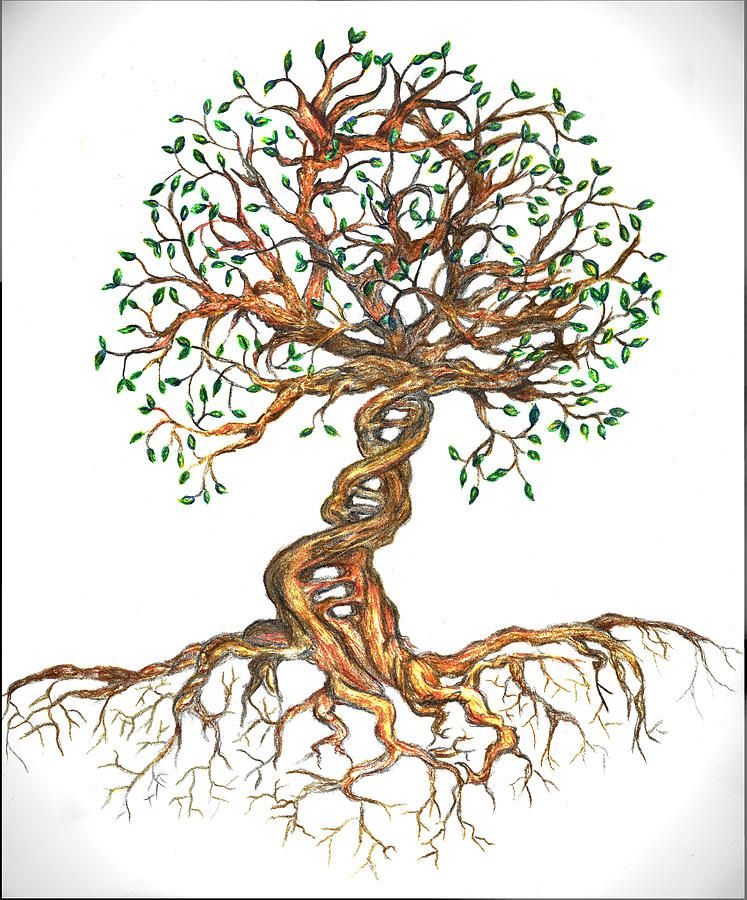 Tree Drawing Dna Tree Of Life By Joanna Aud Dna Tree Tree Drawing Tree Of Life Tattoo