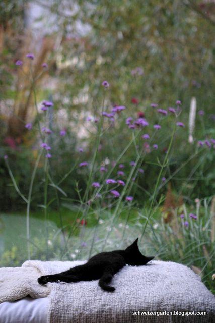 Cat napping in the garden (Katze macht ein Nickerchen im Garten)