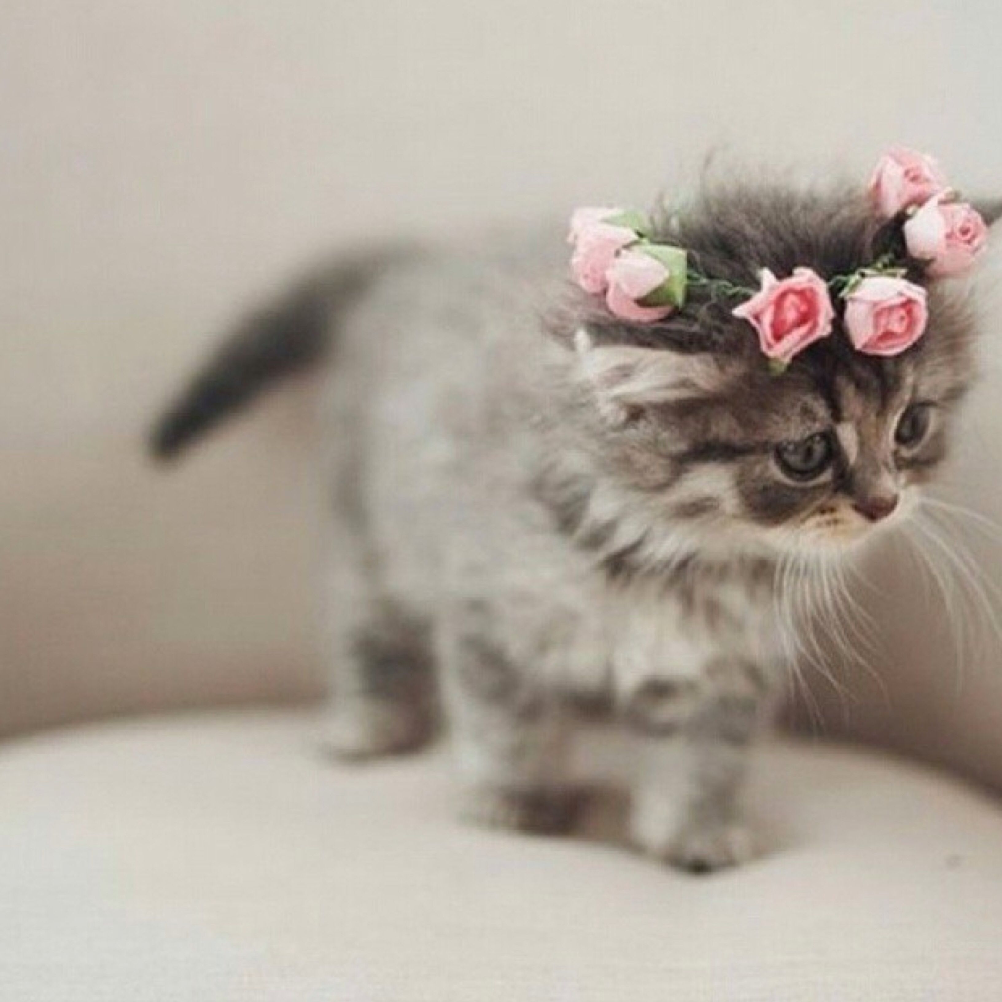 You Can Look As Cute As This One In One Of Our Flower Crowns In Store And Online Cute Animals Kittens Cutest Cute Cats