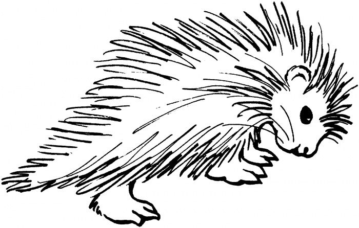 Porcupines Coloring Pages Super Coloring Coloring Pages Free