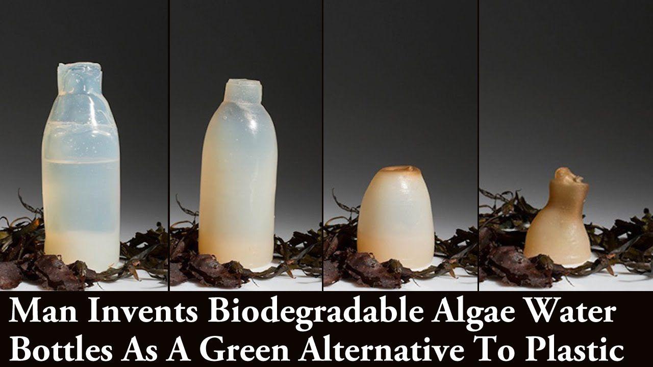 Biodegradable algae water bottles provide a green ...