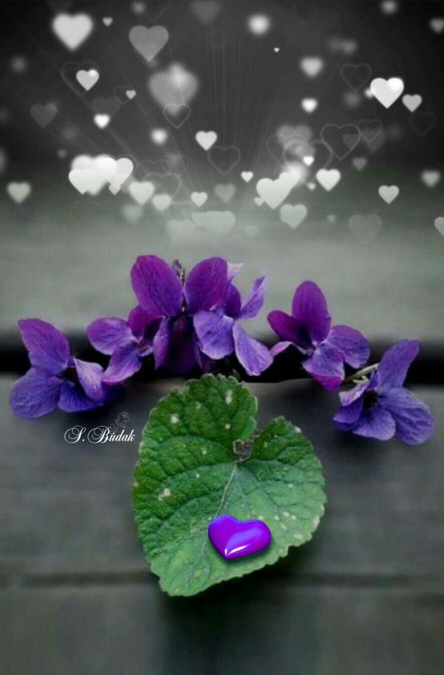 Color splash heart purple flowers photography yeux violets coeur amour toque de color