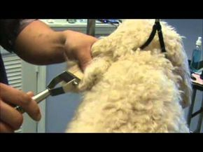 We will tell you how to detangle matted dog hair, what