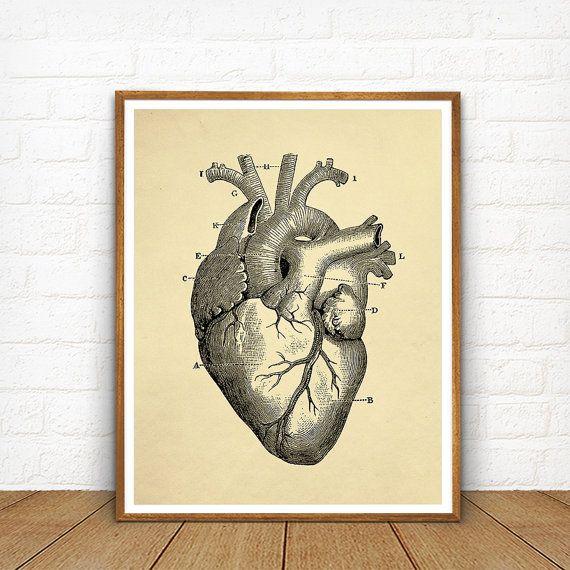 Human Heart Printable Educational Heart Diagram Vintage FFCC