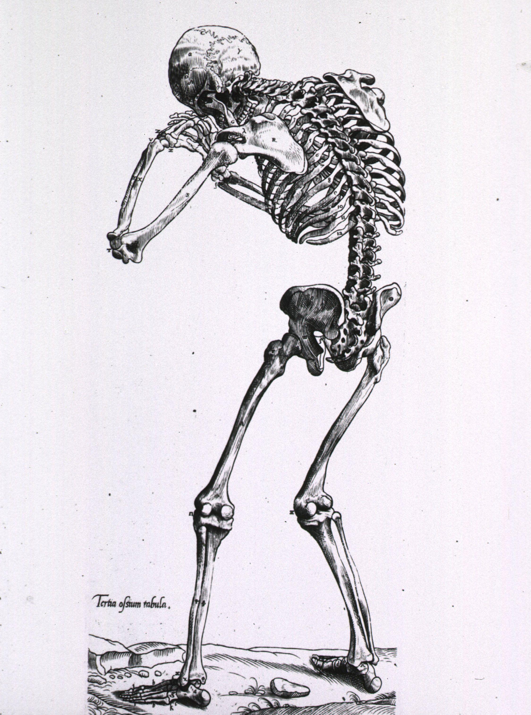 antique anatomical illustration   anatomical illustration ...