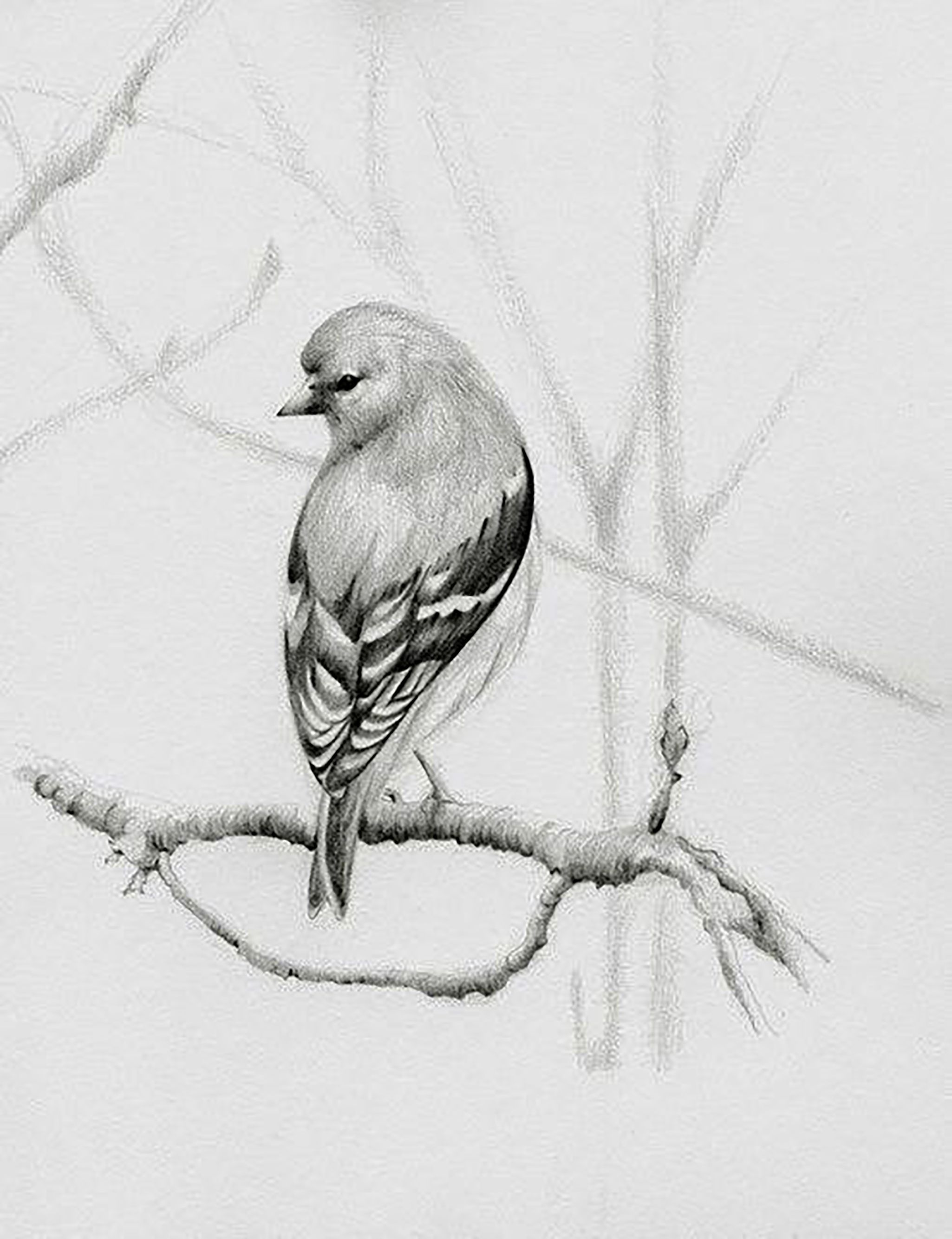 Pencil art drawings bird pencil drawing bird drawings color pencil art animal