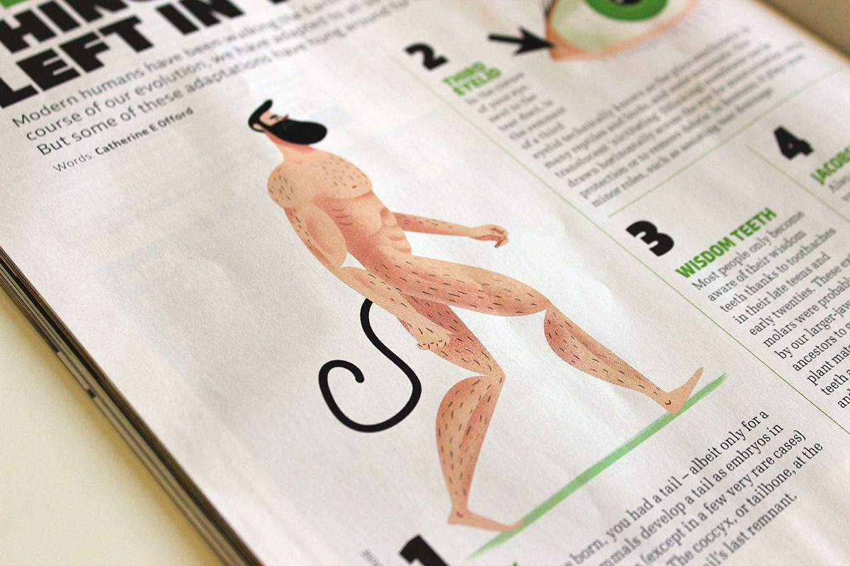 10 weirdest things evolution left in your body on Behance
