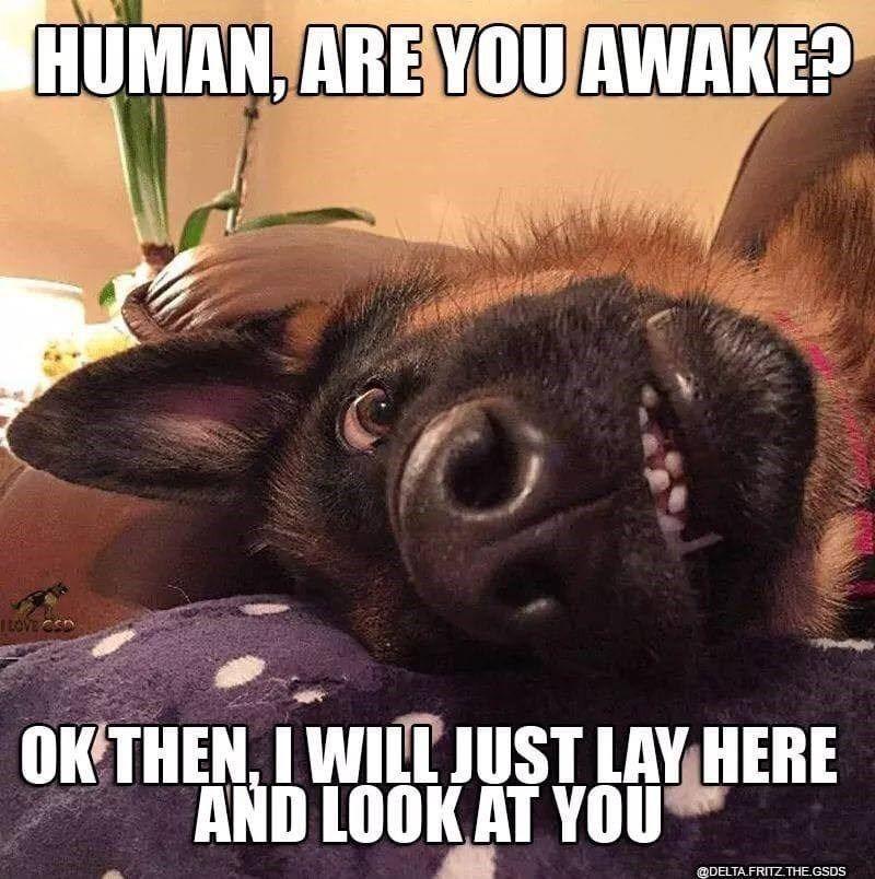 Barkingly Pawerful Doggo Memes Funny Animal Jokes Funny Animal Memes Cute Funny Dogs