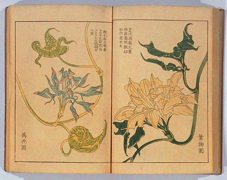 朝顔三十六花撰:Campanillas. Artista: Hattori, Sessai (nacido en 1807). 1854 d. C. Japón. Tokio. (10).