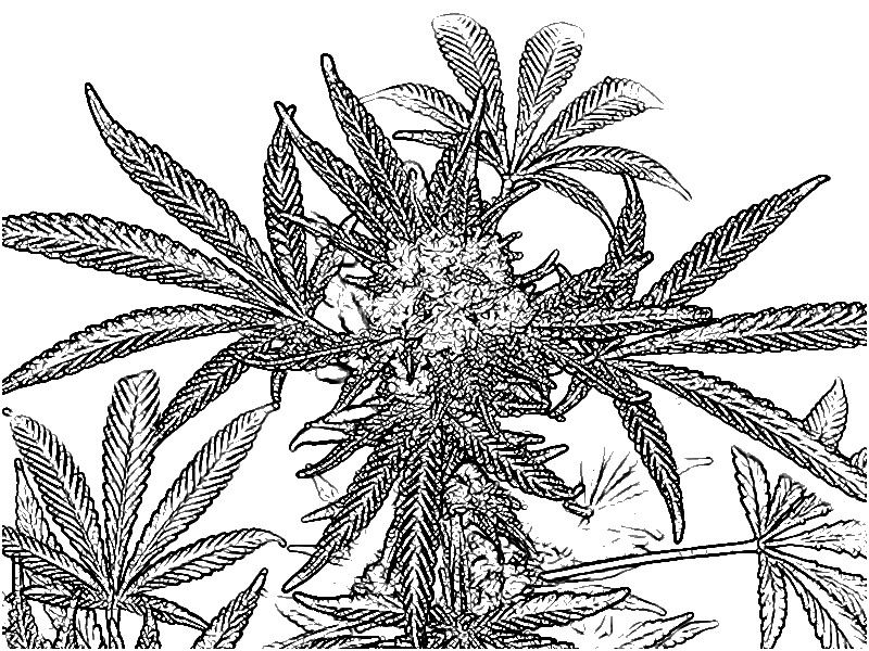 Cute Cool Coloring Book