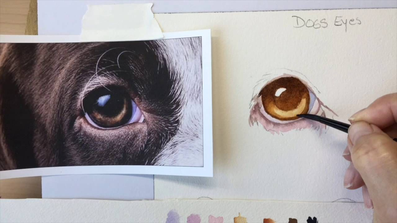 How To Paint A Dog S Brown Eye Youtube Dog Paintings Painting