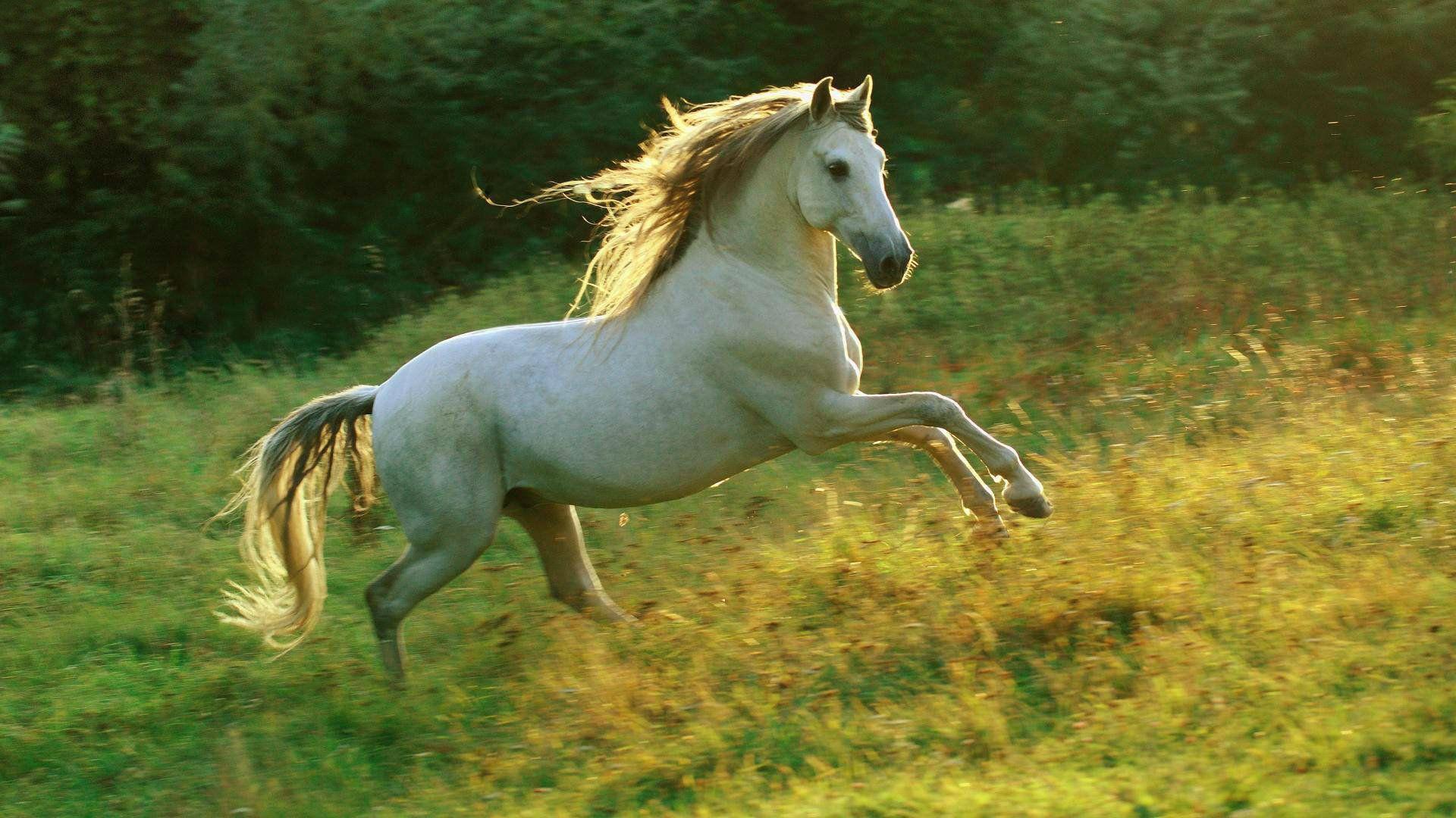 Fantastic Wallpaper Horse Windows - c0c939cb7206cca93a00a8b82d25dedd  Photograph_85837.jpg
