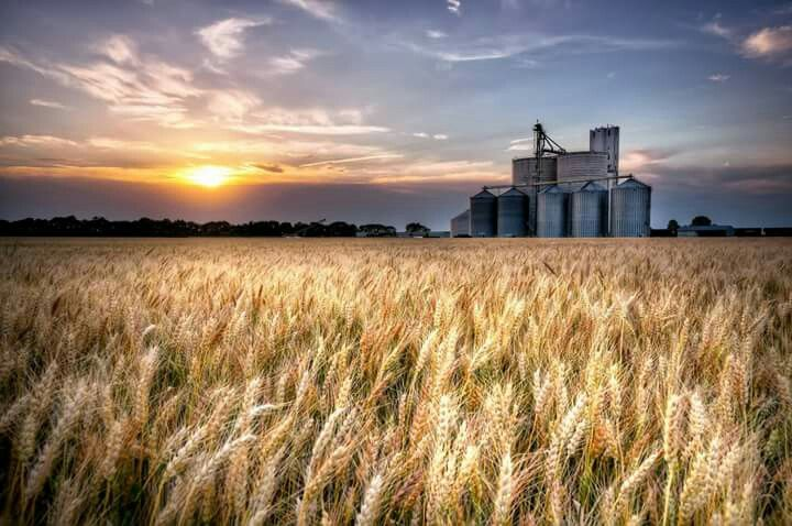 Image result for wheat fields kansas