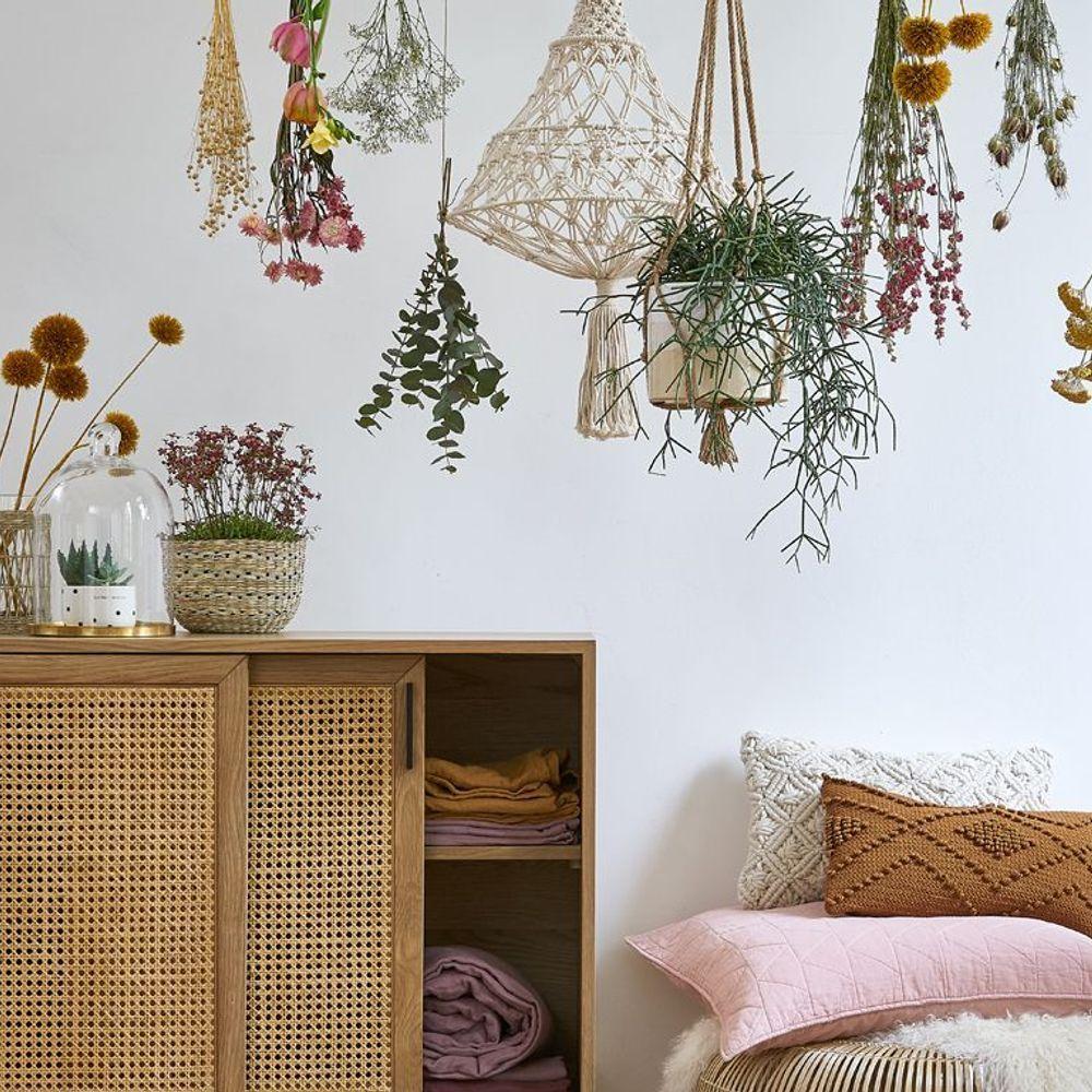 Sommeil : 7 plantes pour mieux dormir (avec images ...