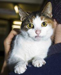 Rspca Chesterfield North Derbyshire Branch Cats For Adoption Cat Adoption Pet Adoption Cats