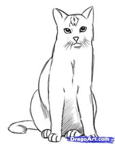 How To Draw A Realistic Cat Draw Real Cat By Dawn With Images