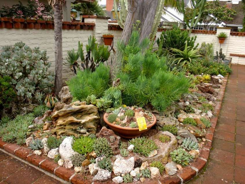 Giardini con piante grasse giardino roccioso piante - Giardini con piante grasse ...