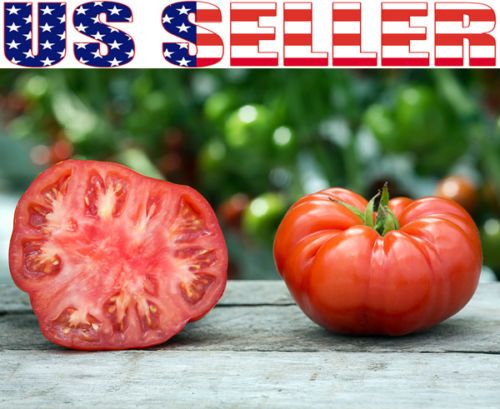 50 Organically Grown Giant Beefsteak Tomato Seeds Heirloom Non GMO Productive | eBay