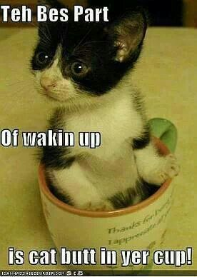 Cupkitty