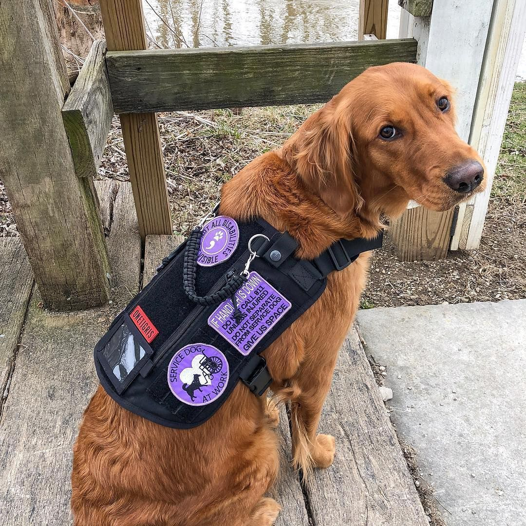 Onetigris Service Dog Assistance Harness Compatible Vest