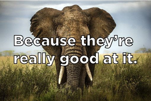Do see elephants why you in never trees hiding Why don't