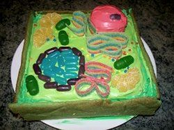 3D Plant Cell Cakes  Theirs learn mitocondria & vacuole when it's in