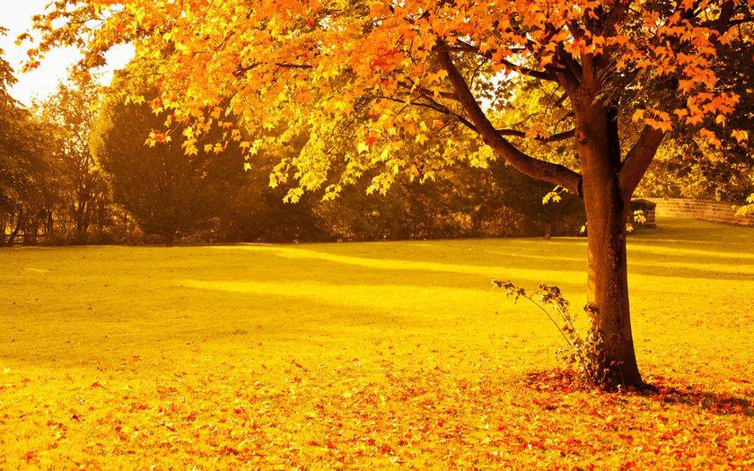 Набор картинок на рабочий стол осень