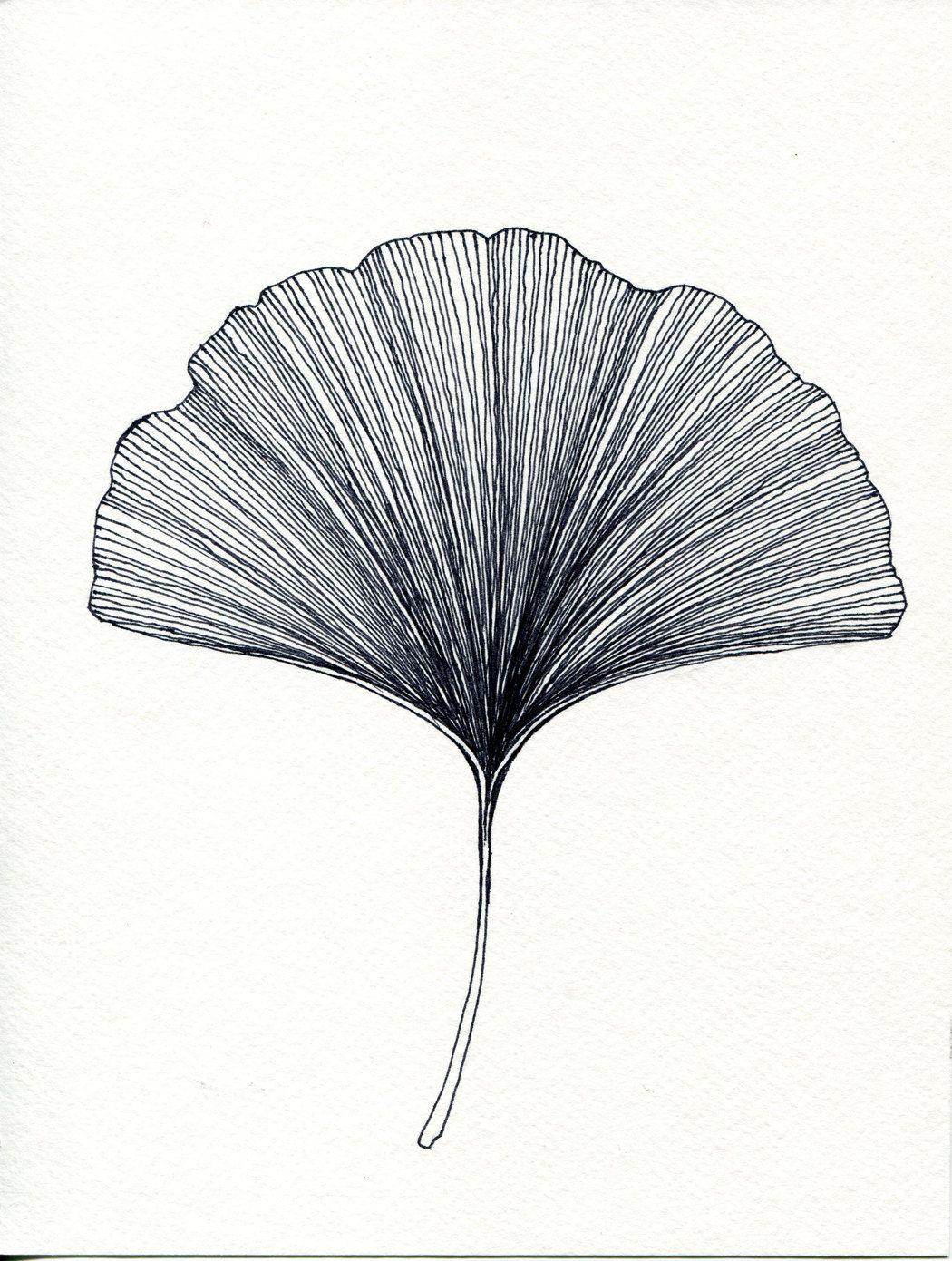 Ginkgo leaf print of original black or green pen and ink drawing