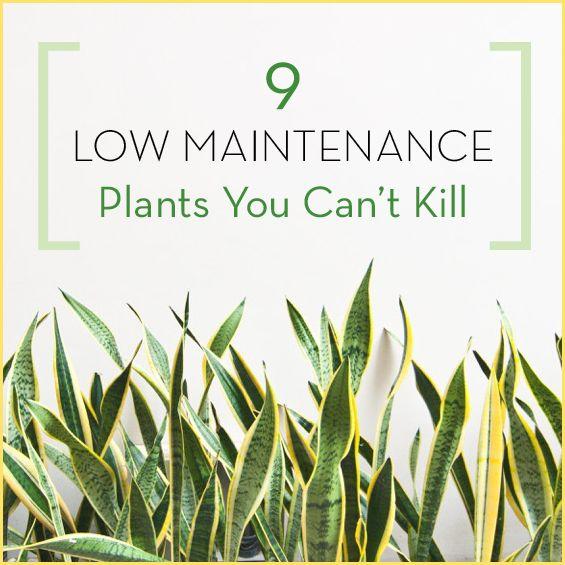 9 Low Maintenance Plants You Canu0027t Kill   Get Healthy U