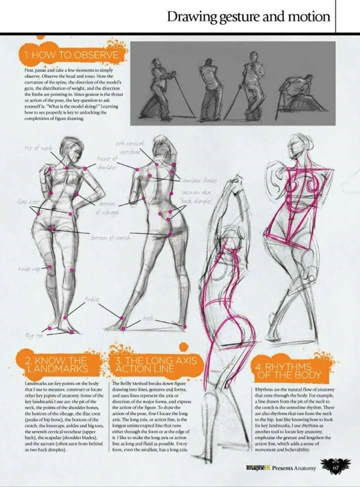 Pin by Daniel Marinho on estudo | Pinterest | Anatomy, Pose and Drawings