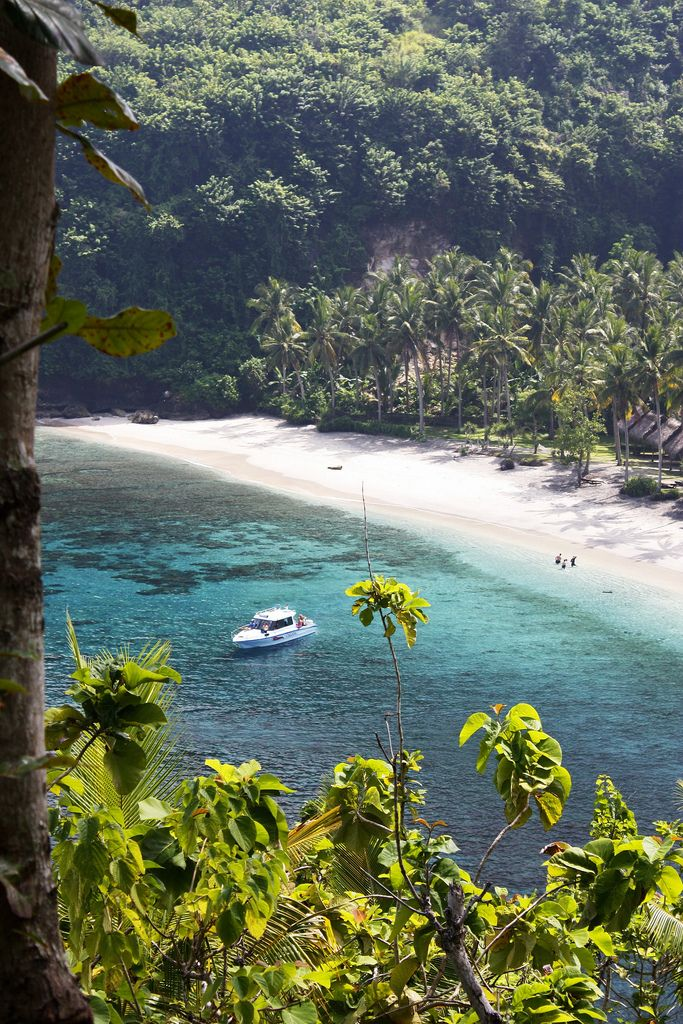 horizontal indonesia sumatra tropical rainforest trees