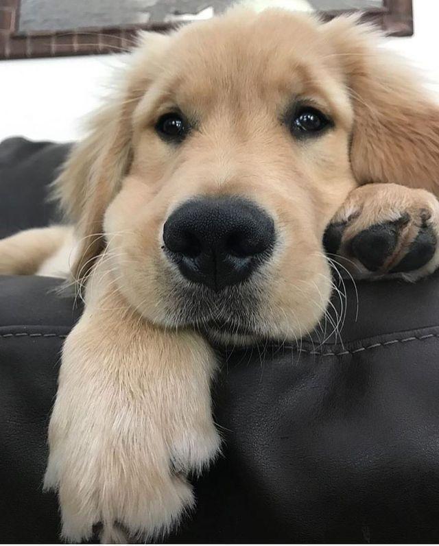 Pin By John Jones On Dog Dogs Cute Animals Cute Dogs