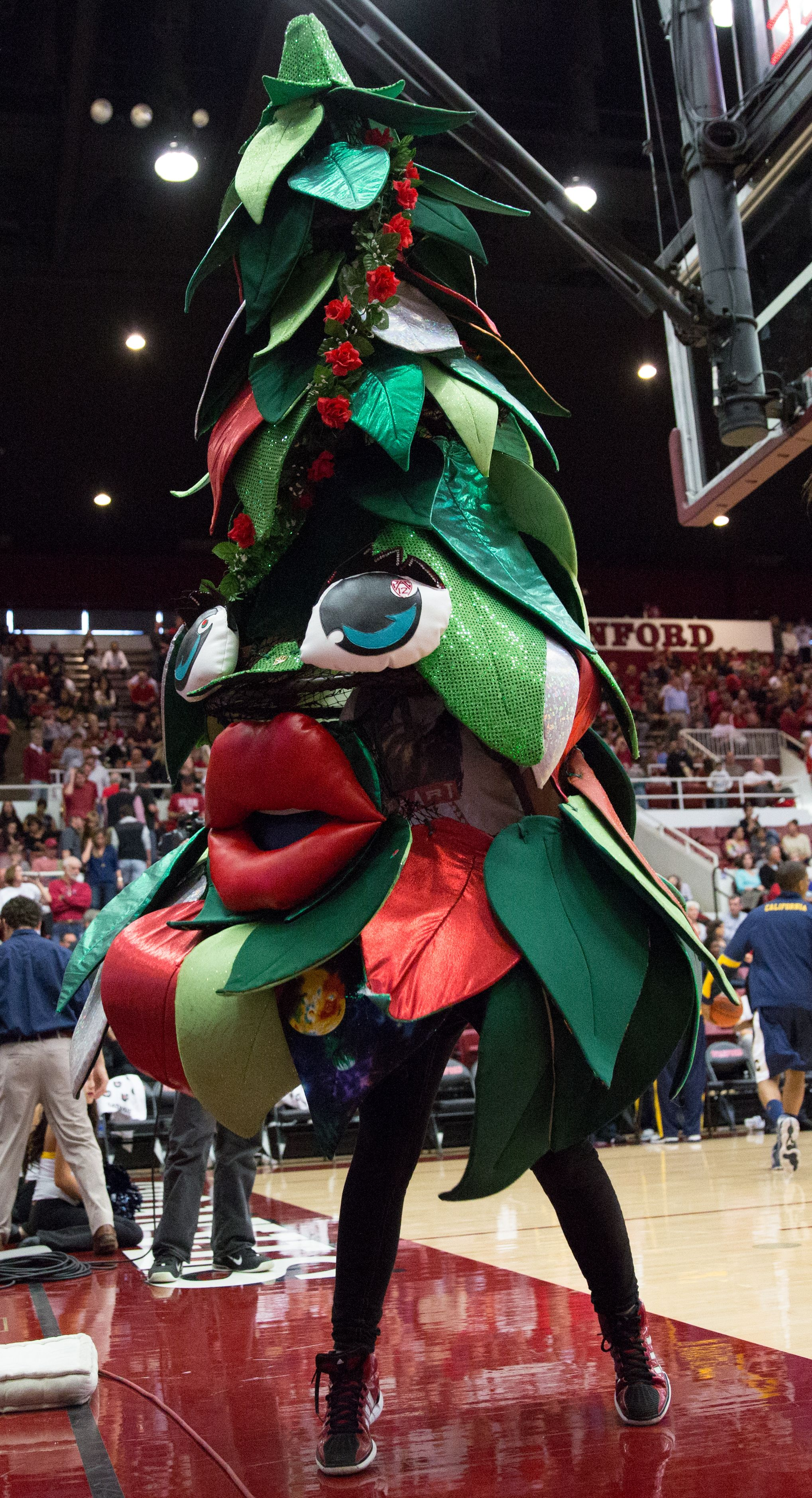 The Origins Of Stanford S Tree Mascot The Daily Californian Stanford Tree Stanford Mascot