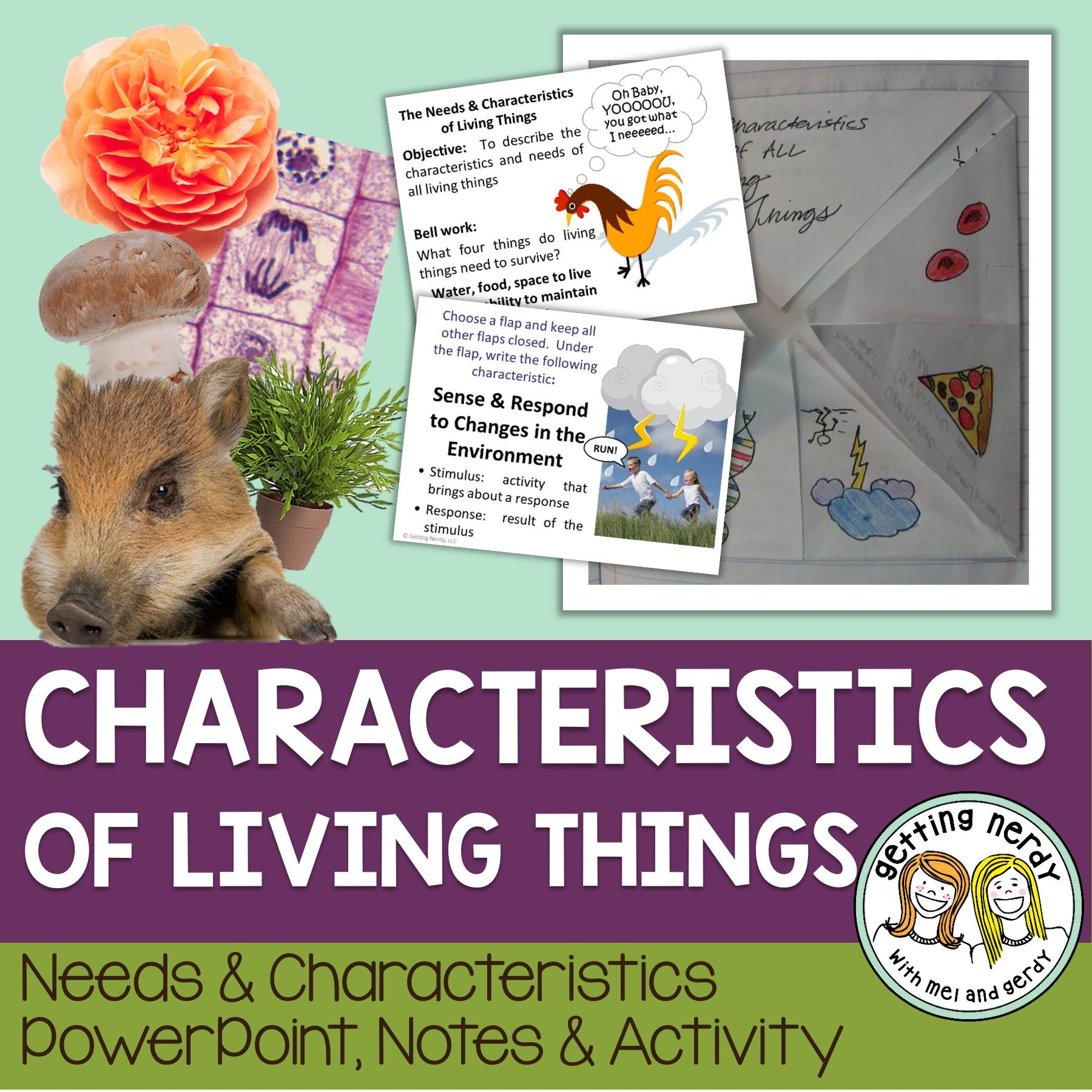 Needs Amp Characteristics Of Living Things