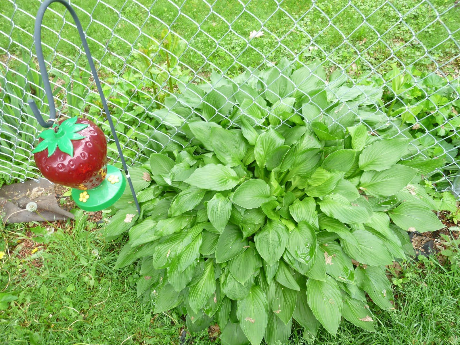 Garden Answers Plant Identification App Ground cover