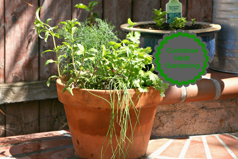 Start a container herb garden
